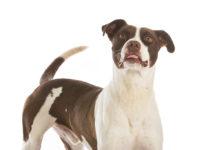 SPCA Grassy Park Woefie Wandel 2017