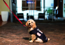 SA Guide-Dogs Association for the Blind