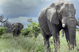Elephants in Moremi. Picture: George Logan