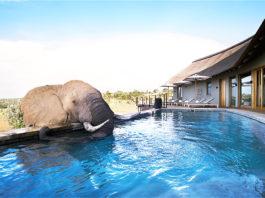 Mhondoro: World Elephant Day