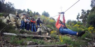 cape town ziplines sa forestadventures book tickets