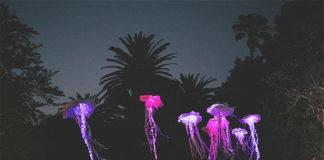 Spier lights