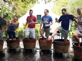 Enjoy The Muratie Harvest Festival in Stellenbosch's Knorhoek valley