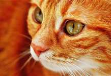 5 reasons to have a pet in your life