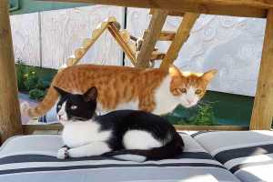 Celebrate International Cat Day at Cat Heaven Rescue Cat Café and Gift Shop in Somerset West