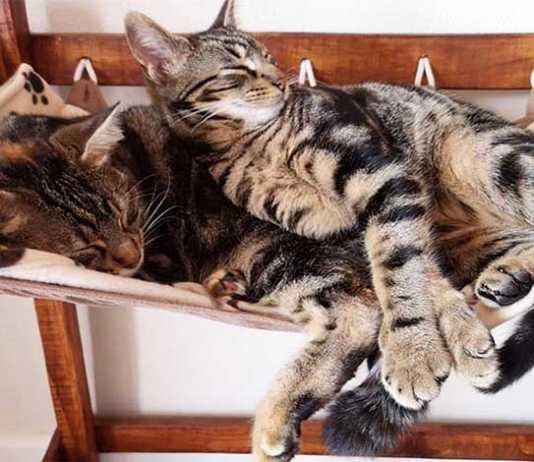 Cat Heaven Rescue Cat Café Somerset West