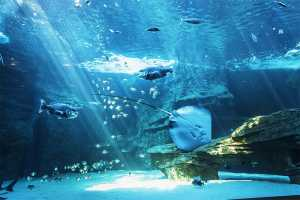 Participate in From Home to Ocean at the V&A Waterfront Aquarium