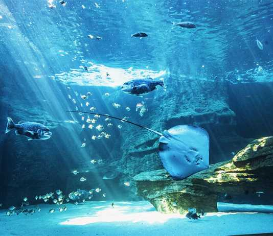 From Home to Ocean is a forum theatre experience at the V&A Waterfront Aquarium
