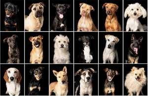 A Dog-a-Day #BigOnRescue campaign