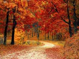 Enjoy Britain's fiery Autumn delights
