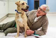 Paul O Grady For the Love of Dogs Series 8