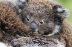 Australia Day on National Geographic Wild