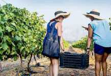 Nederburg Harvest at Dusk Festival tickets