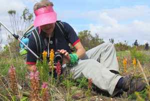 Flowers are bountiful as amateur botanists trip over three disa species on the first farm on the Tulbagh Disa Trail. Picture: Karen Watkins