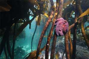 My Octopus Teacher Craig Foster