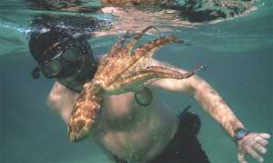 My Octopus Teacher: Craig Foster interview