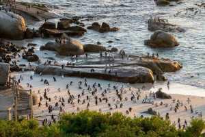 Tintswalo Boulders Beach penguins