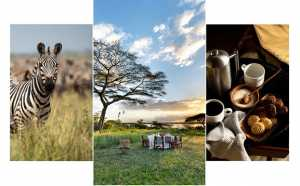 Serengeti Sojourns Newmark Hotels