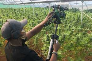 Watch Craft Cannabis TV on DSTV across Africa